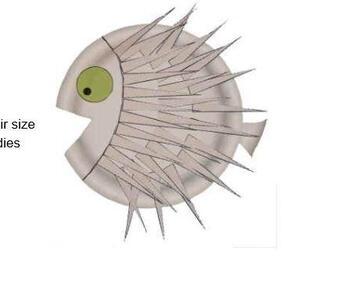 puffer_fish.jpg
