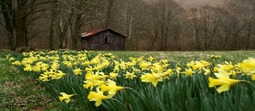Spring_Pic_1.jpg