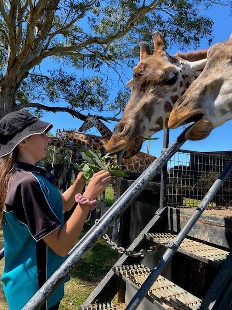 Giraffe winners 3