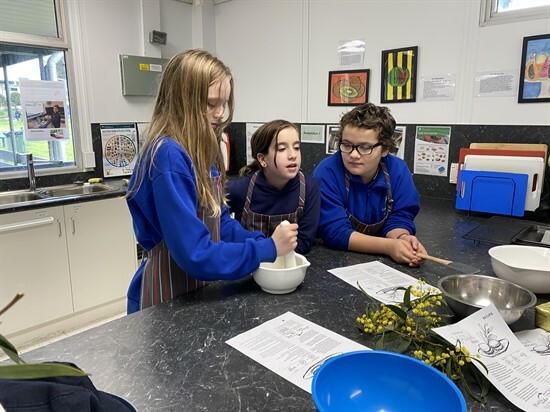 grinding the wattle seeds