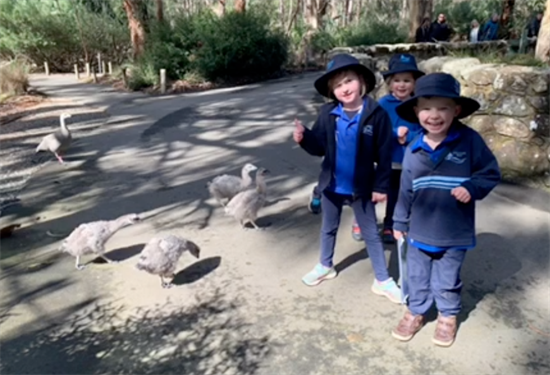 check out the goslings