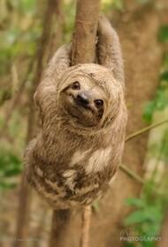 Sloth_2.jpg