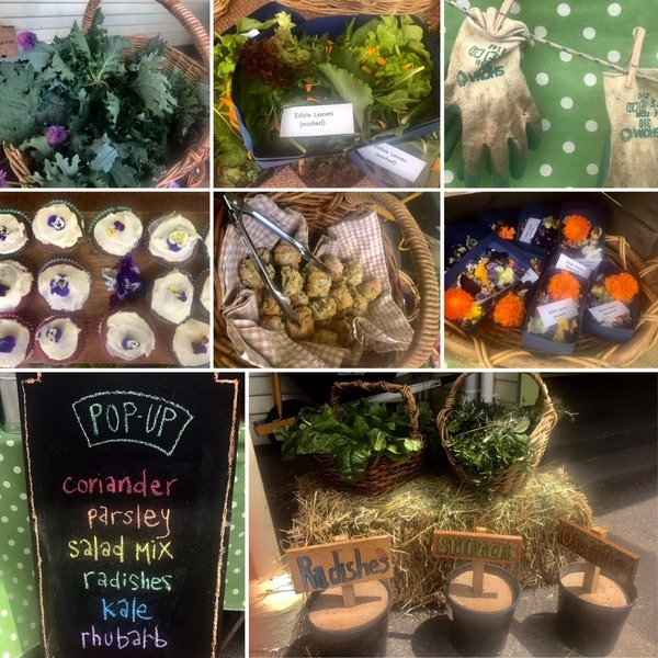 Garden Shop (2)