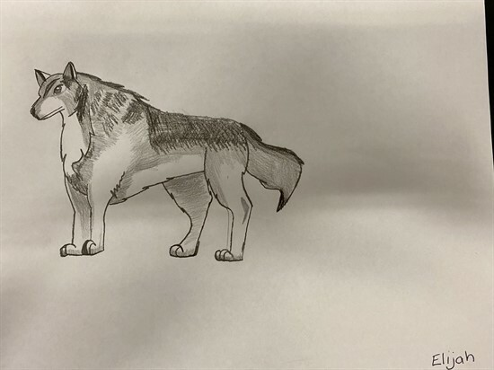 Wolf Sketches by 56GZ (7)