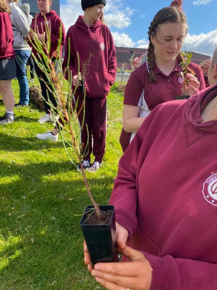 Aboriginal planting