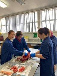 Science_disection_5.jpg