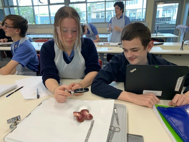 dissection 4