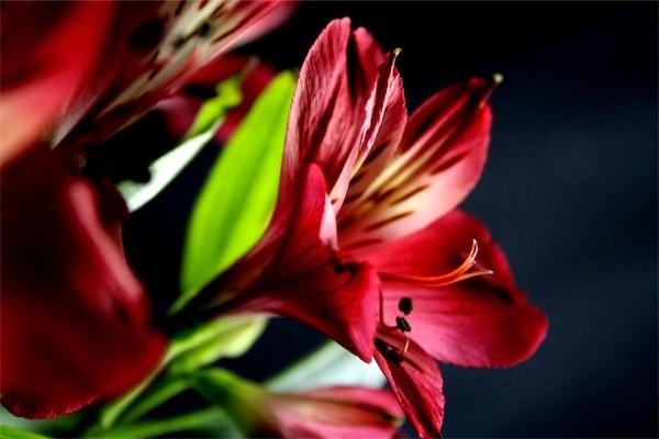 FlowerMaddisonClark