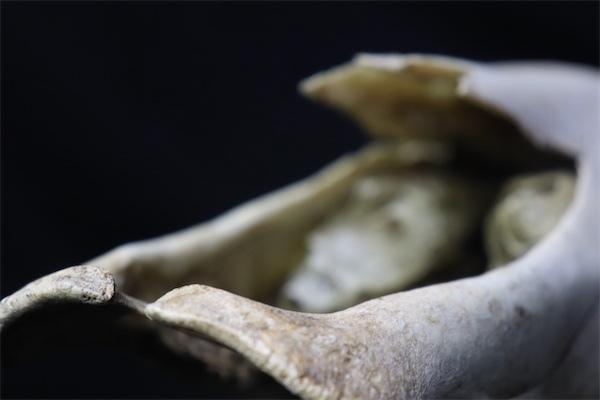 MiaAtherton.Skull