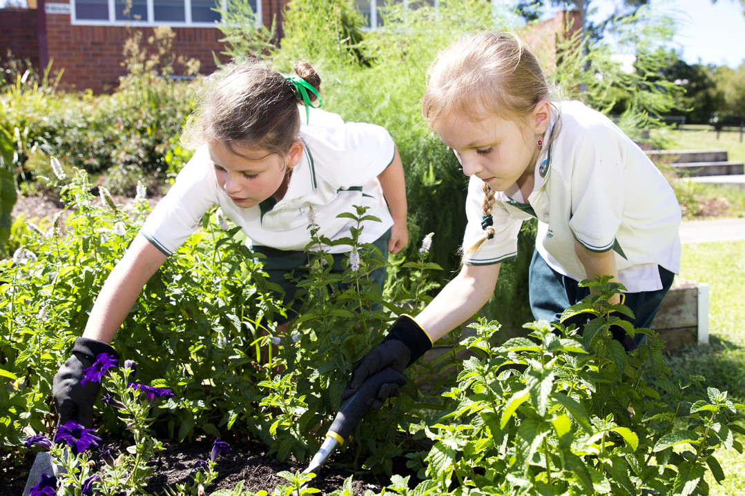 students working in garden