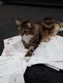 Purr_fect_cat_pic.jpg