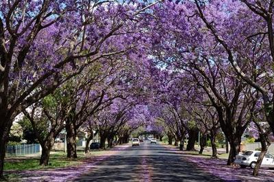 springaustralia.jpg