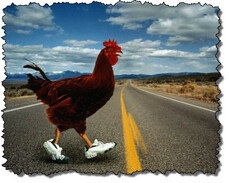 why_did_the_chicken_cross_the_road_2.jpg